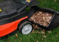 Mow don't rake fall leaves
