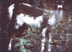 More deer photos