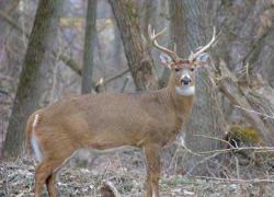 2011 Michigan deer hunting prospects