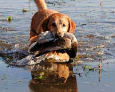 Pure Michigan Hunt winner relishes waterfowl outing