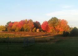 Gorgeous autumn colors