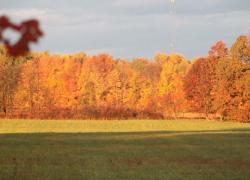 More fall photos