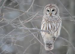 Owl pays a visit