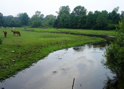 Trout Unlimited receives funds to restore Cedar Creek
