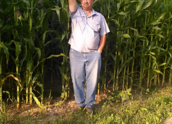 How tall is your corn?