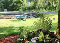 Save a creek—plant a rain garden