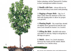 Join The Arbor Day Foundation In September Cedar Springs Post Newspaper