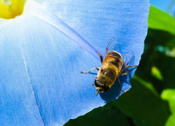 Businesses backing away from bee-killing pesticides