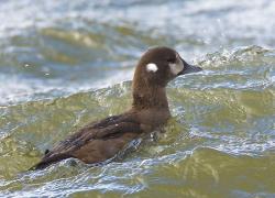 Birding tour of Ottawa County set for Jan. 31