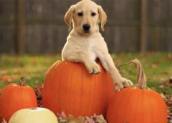 Halloween and Harvest Happenings