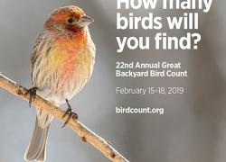 "Great Backyard Bird Count should be ""finchy"" and fun"
