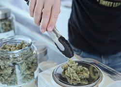 Reminder: give your input at marijuana forums