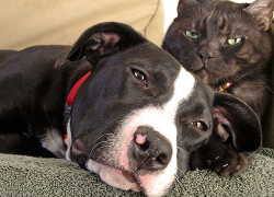 Marijuana and pets: five things pet owners need to know