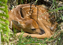 Spring brings baby wildlife and a reminder to let them be