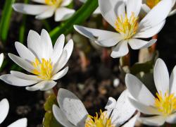 The Art of flowering
