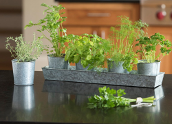Grow your own herbal centerpiece for the holidays