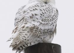 Audubon's Christmas Bird Count