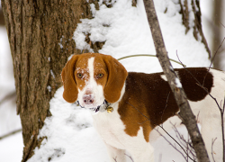 Keep pets and animals safe during cold weather