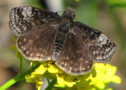 Records check finds 66 butterfly species