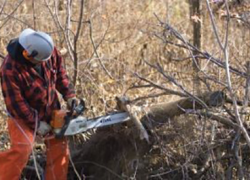 State forest fuelwood permits available now at no cost