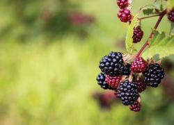 Bring forest flavors to your plate with new foraging webpages