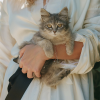 State's first case of SARS-CoV-2 identified in a cat
